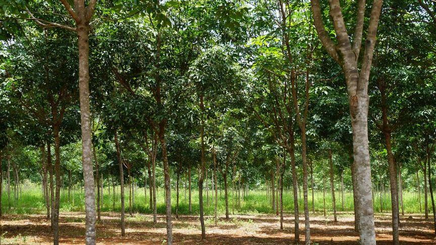 Bild zum Artikel Timberfarm GmbH
